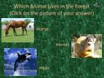which animal lives in the forest click on the picture of your answer