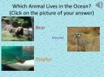which animal lives in the ocean click on the picture of your answer