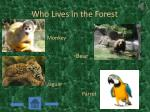 who lives in the forest