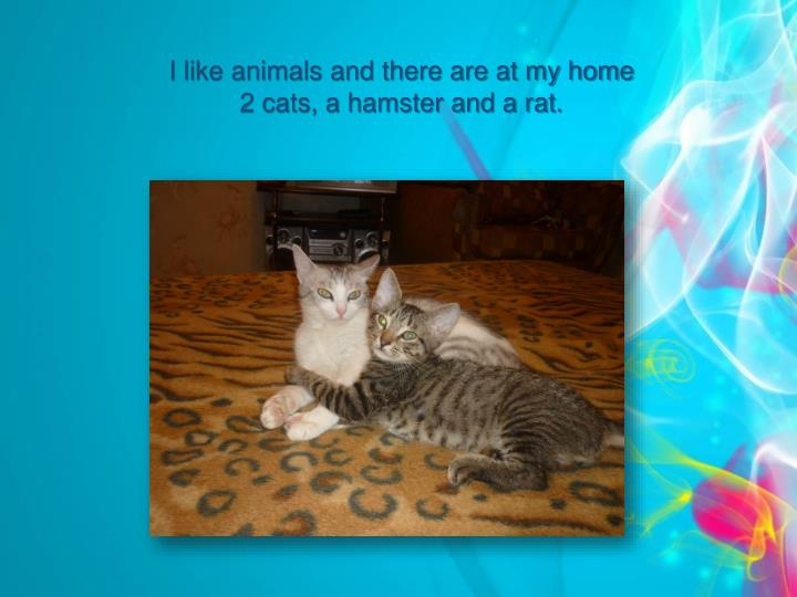 I like animals and there are at my home 2 cats, a hamster and a rat.