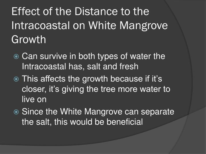 Effect of the Distance to the Intracoastal on White Mangrove Growth