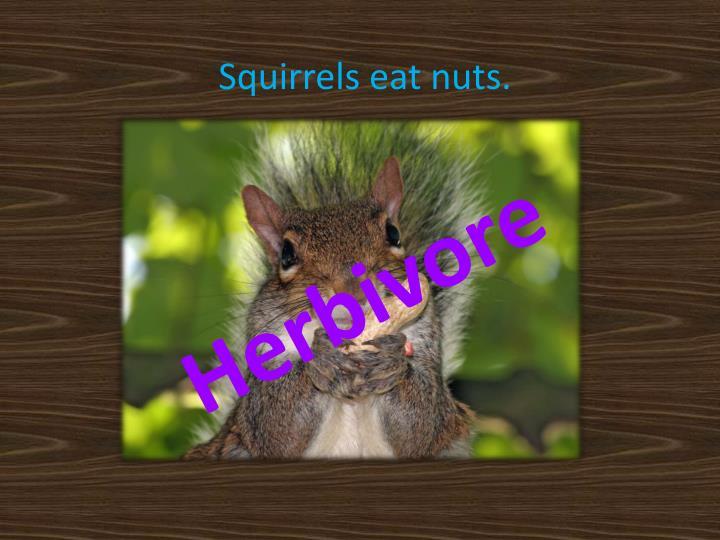 Squirrels eat nuts.