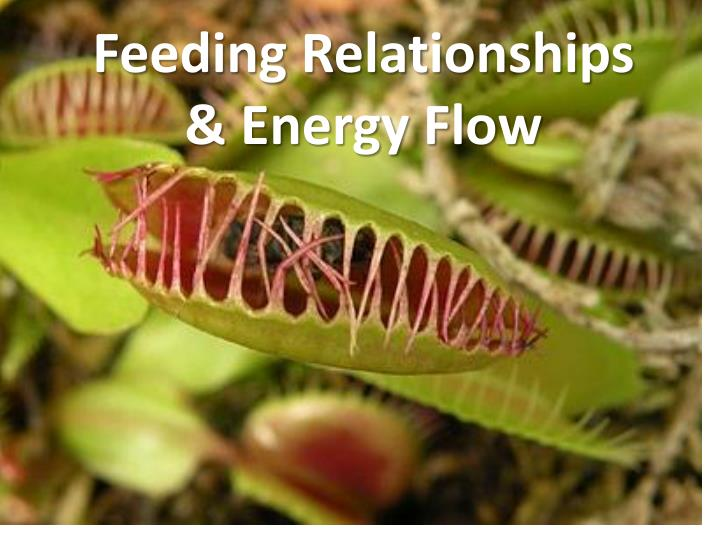 Feeding relationships energy flow