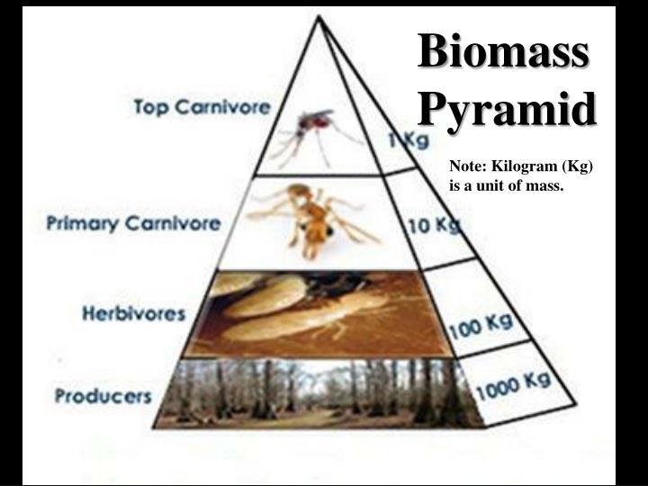 Biomass Pyramid