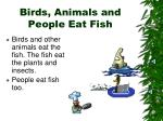 birds animals and people eat fish