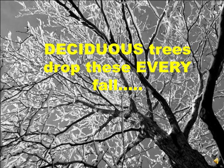 DECIDUOUS trees drop these EVERY fall…..