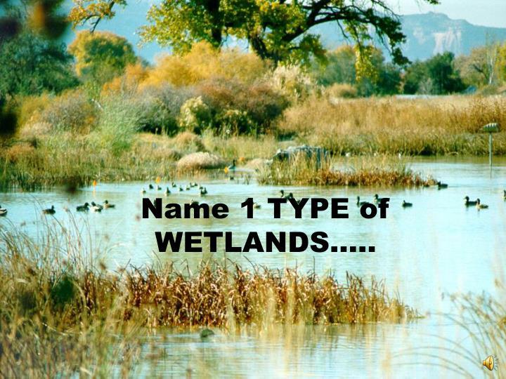 Name 1 TYPE of WETLANDS…..