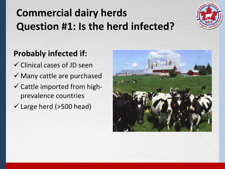 Commercial dairy herds