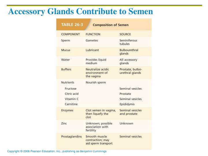 Accessory Glands Contribute to Semen