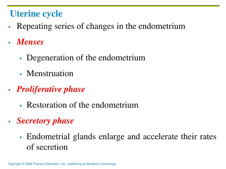 Uterine cycle