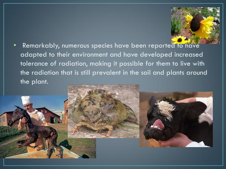Remarkably, numerous species have been reported to have adapted to their environment and have developed increased tolerance of radiation, making it possible for them to live with the radiation that is still prevalent in the soil and plants around the plant.