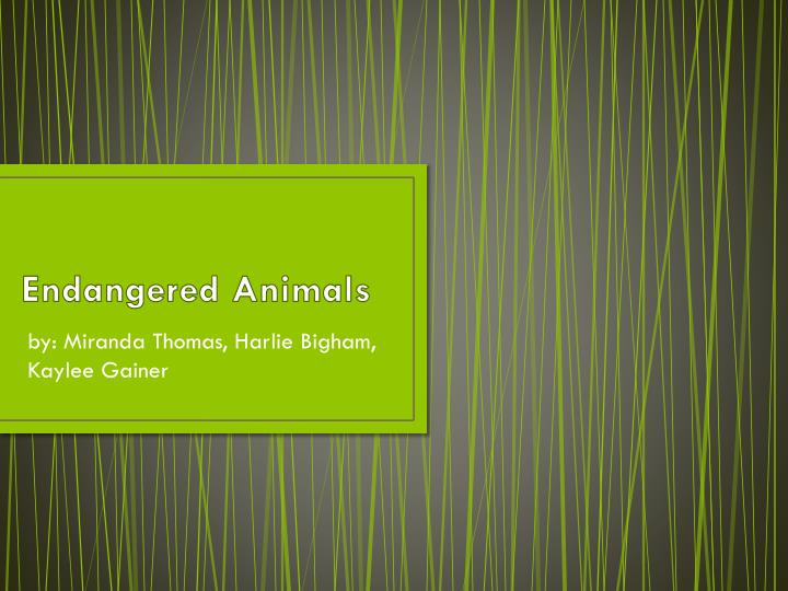 endangered animals n.