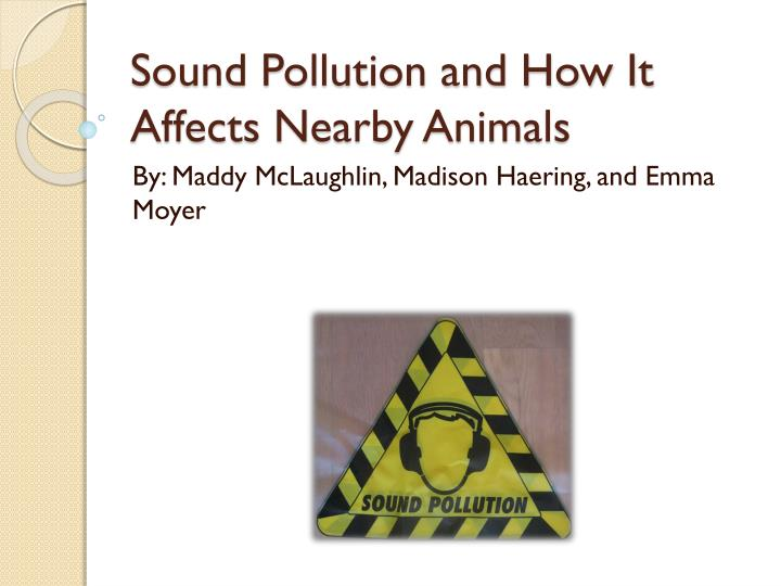 sound pollution and how it a ffects n earby animals n.