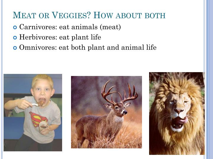 Meat or Veggies? How about both