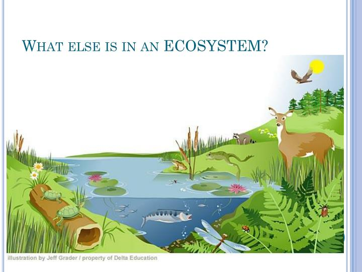 What else is in an ECOSYSTEM?