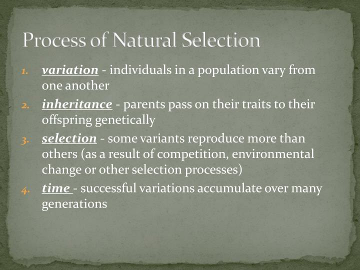 Process of Natural Selection