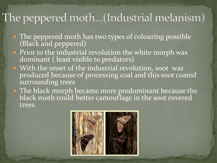 The peppered moth…(Industrial