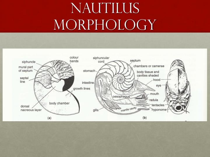 Nautilus morphology1