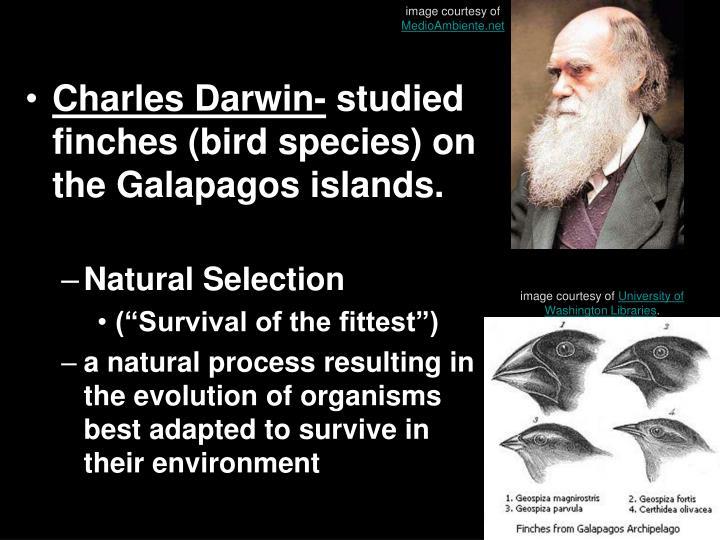 Natural selection1