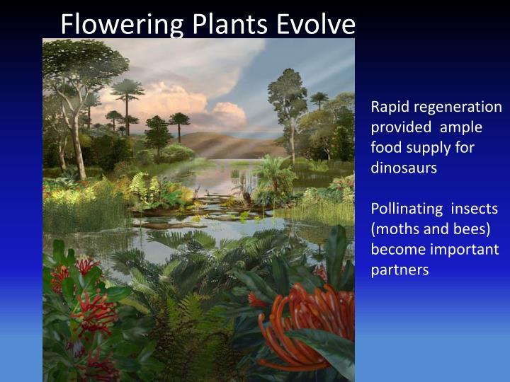 Flowering Plants Evolve