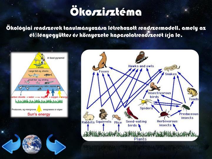 Ökoszisztéma
