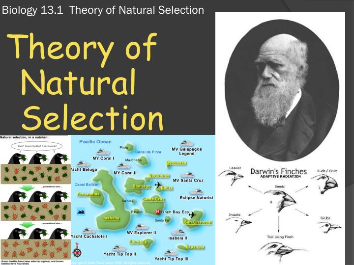 an analysis of the development and opposition of the theories on evolution and natural selection English philosopher and sociologist who applied the theory of natural selection to development in which the natural laws that govern its evolution.