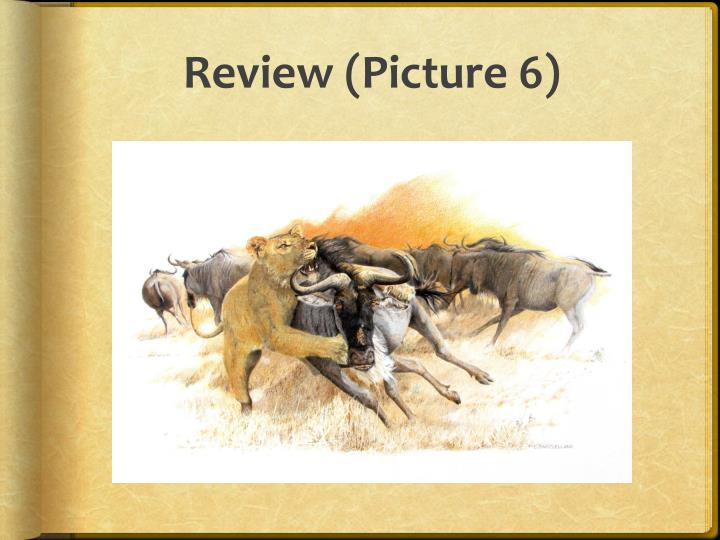 Review (Picture 6)