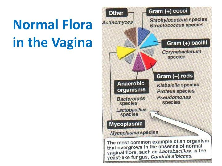 Normal Flora in the Vagina
