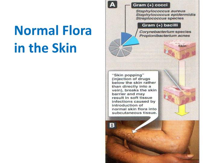 Normal Flora in the Skin