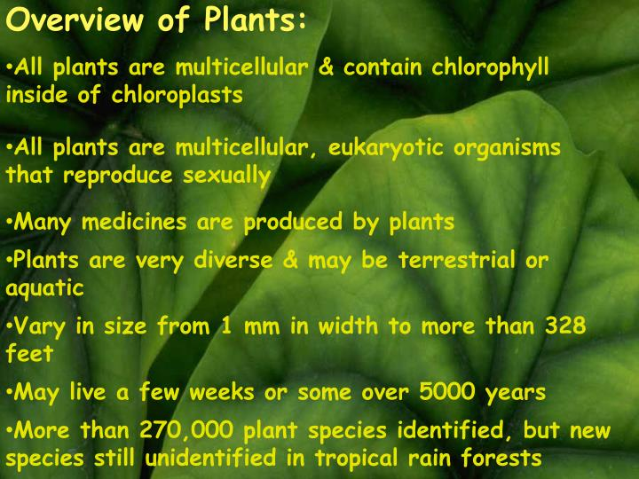 Overview of Plants: