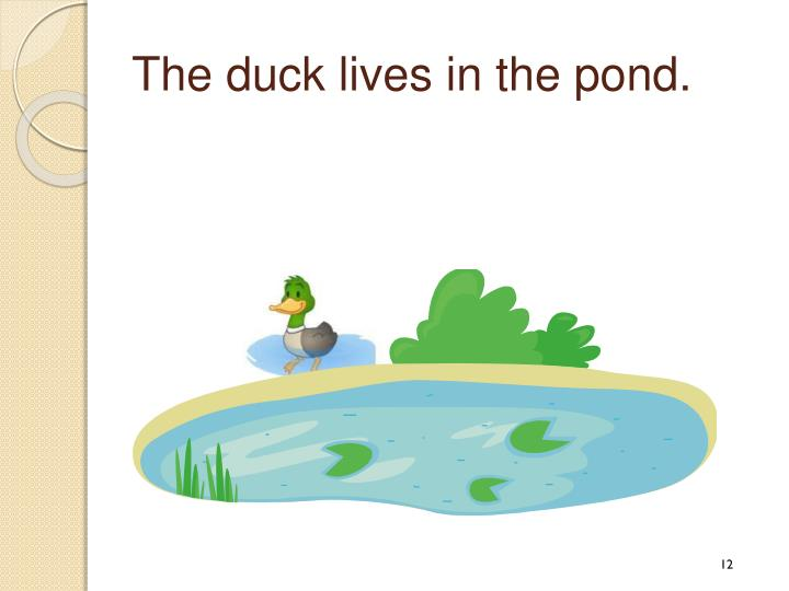 The duck lives in the pond.