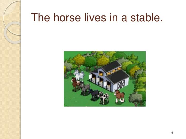 The horse lives in a stable.