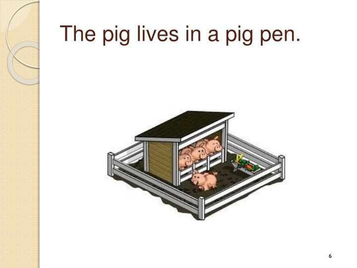 The pig lives in a pig pen.