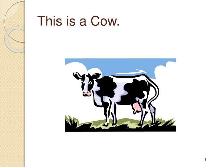 This is a Cow.