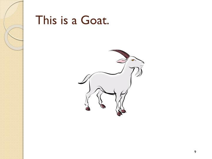 This is a Goat.