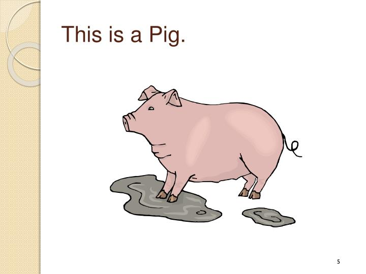 This is a Pig.