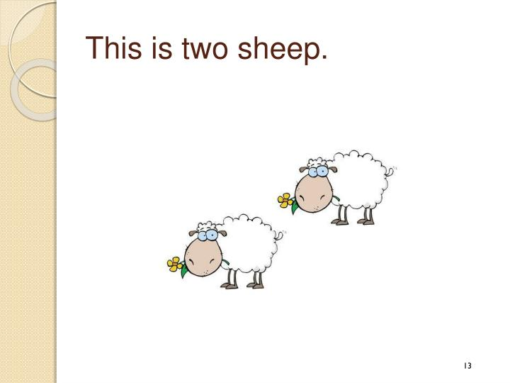 This is two sheep.