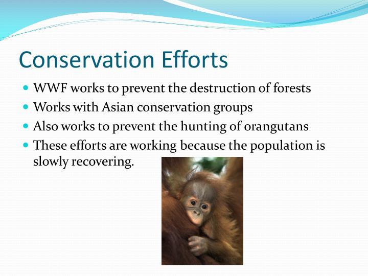 Conservation Efforts
