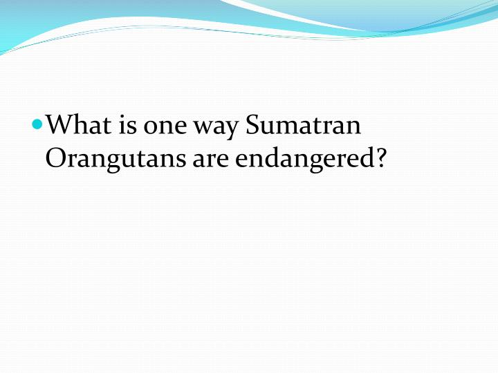 What is one way Sumatran Orangutans are endangered?