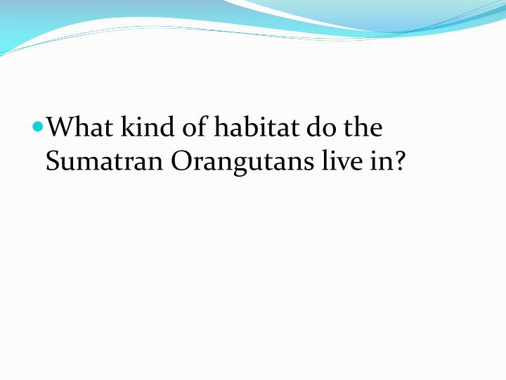 What kind of habitat do the Sumatran Orangutans live in?