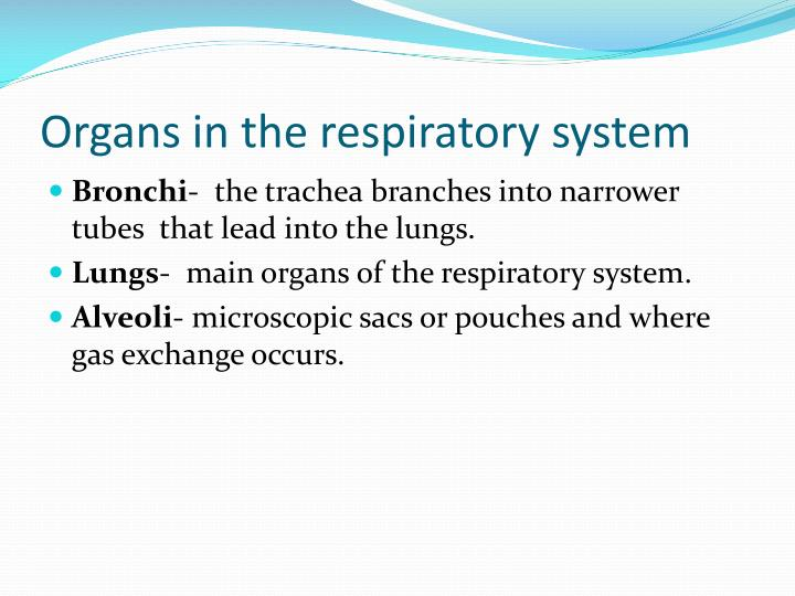 Organs in the respiratory system