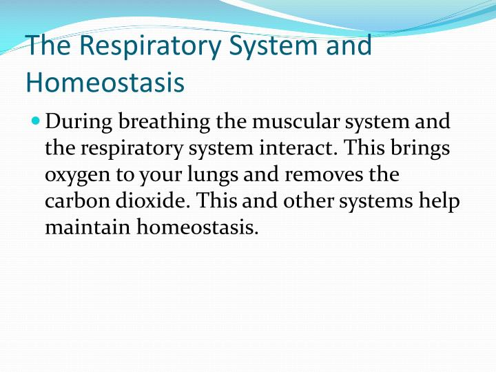 The Respiratory System and Homeostasis