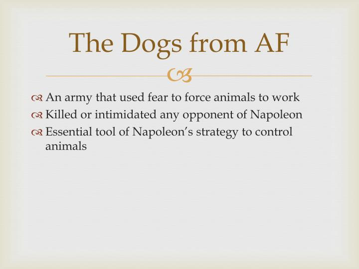 The Dogs from AF