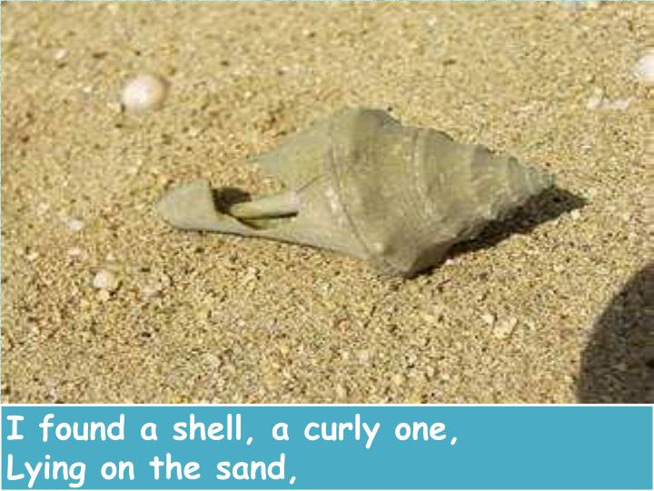I found a shell, a curly one,