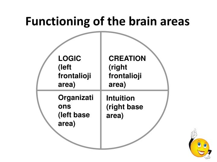 Functioning of the brain areas