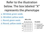 refer to the illustration below the box labeled x represents the phenotype