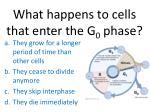 what happens to cells that enter the g 0 phase