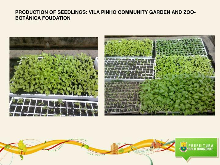 PRODUCTION OF SEEDLINGS: VILA PINHO COMMUNITY GARDEN AND ZOO-BOTÂNICA FOUDATION