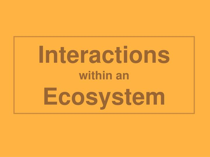 Interactions within an ecosystem