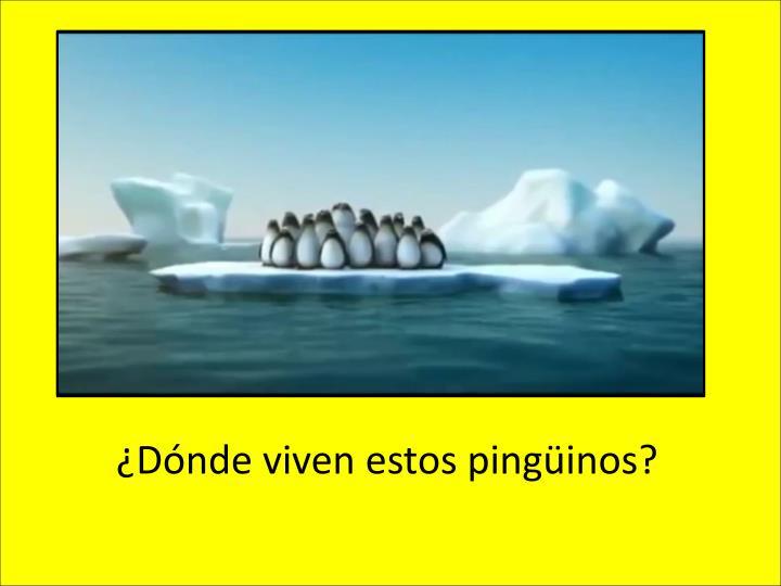 ¿Dónde viven estos pingüinos?